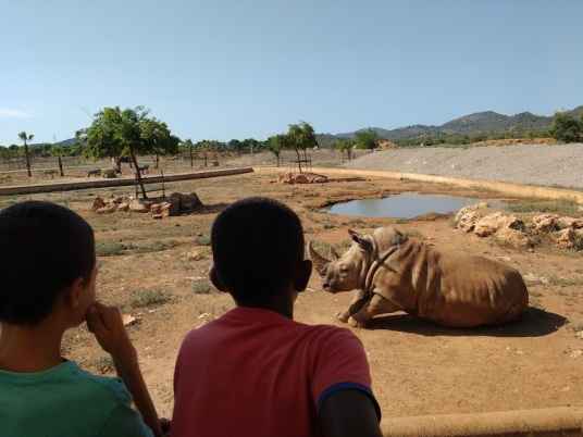Rhino at Majorca Safari Zoo