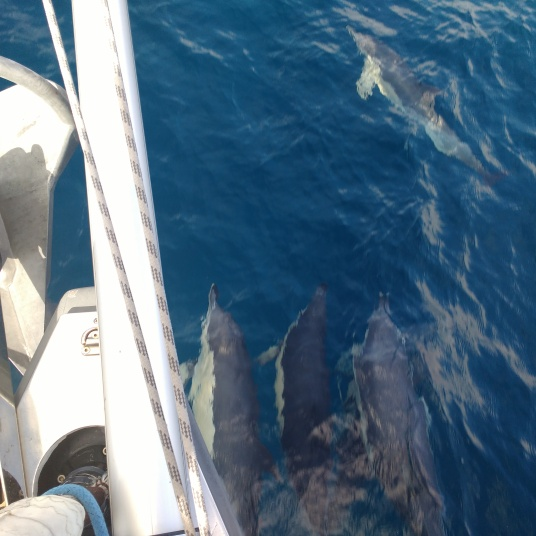 Dolphins with Soledad SV