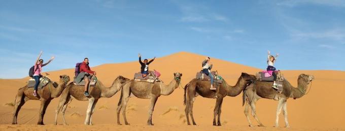 Desert dromedaires trip